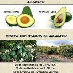 Impulso al cultivo del aguacate en Tenerife