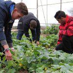Curso Internacional de Agroecología, descuento 50% a estudiantes y desempleados