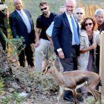 Oasis Park Fuerteventura colabora con la reintroducción de 43 gacelas de Cuvier en Túnez