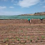 Granadilla presenta un plan de empleo y formación en actividades relacionadas con el sector agrario