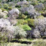 28 usuarios de la dirección de zona de la ONCE realizan la ruta del almendro en flor