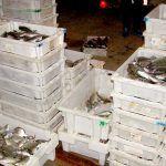 Denunciadas dos embarcaciones por la captura de 1.100 kilos de pescado de forma ilegal