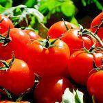 Convocada ayudas a los productores de tomate de exportación por 7,7 millones de euros