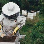 La Guardia Civil denuncia la tenencia ilegal de abejas no autóctonas en la isla de La Palma