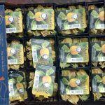 Agricultura ha incautado frutas tropicales exóticas ilegales en Gran Canaria