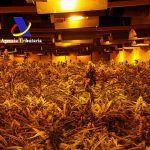 Incautan cerca de 7.500 plantas de marihuana en tres naves industriales de Madrid
