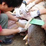 Oasis Park Fuerteventura organiza cursos de formación con expertos mundiales en medicina zoológica