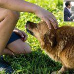 CC Adeje persigue mejorar la gestión del Centro Integral de Animales
