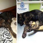 Detenido en Málaga por maltrato animal a dos cachorros