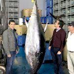 Reclaman un reparto justo de la cuota de pesca del atún rojo