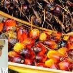 El aceite de palma se ha convertido en una materia prima muy utilizada en la industria alimentaria