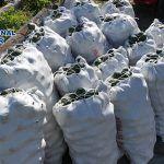 La Policía Nacional ha evitado el robo de 1.400 kg de aguacates en Puerto de La Cruz-Los Realejos