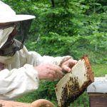 Santiago del Teide acoge un curso de iniciación a la apicultura nivel I