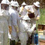 Curso de manipulador de alimentos básico en el sector de la miel en Santiago del Teide