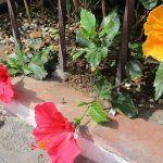 Campaña 'Pon flores y plantas de Tenerife en tu vida'