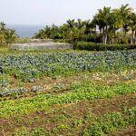 Loro Parque produce 36 toneladas de frutas y hortalizas ecológicas al año