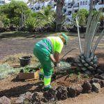 El Servicio Canario de Empleo selecciona a 145 desempleados de larga duración en Arona