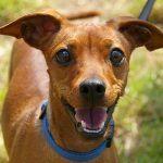 El próximo miércoles entra en vigor la ordenanza de protección de animales en Santa Cruz