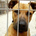 El Gobierno de Canarias abre el trámite de consulta sobre la normativa de protección animal