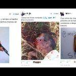 """Realizan una puja en Twitter para """"cazar"""" al presidente de una asociación contra el racismo"""