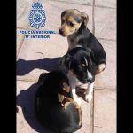 Detenido por abandonar a tres cachorros dentro de una bolsa en la carretera en Cádiz