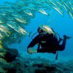 Fenáutica premiará las mejores imágenes de la riqueza natural de los fondos marinos de Arona
