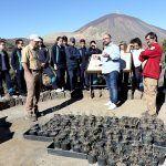 Plan de recuperación de la jarilla de cumbre, especie única del Parque Nacional del Teide