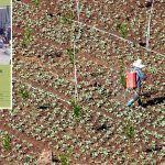 El Cabildo edita un libro para optimizar la cantidad de fertilizante que se aporta a los cultivos