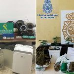 Dos incautaciones de marihuana en Adeje que suman un total 255 plantas