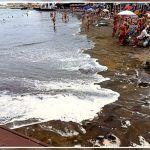 Sanidad Ambiental informa sobre la posible llegada de Macroalgas a nuestras Playas