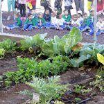 El Colegio Chigora de Chío en Guía de Isora amplía su huerto escolar