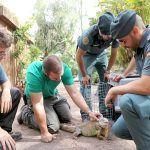 La Guardia Civil reubica a una Iguana en Oasis Park Fuerteventura y evita su abandono