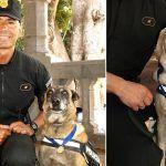 Santa Cruz condecora a dos perras policía que se jubilan tras 10 años de servicio