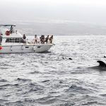 Mayor control en la observación recreativa de cetáceos