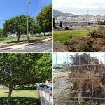 Talan los árboles del Parque Urbano La Trujilla en Cabo Blanco