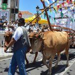 Folclore, parrandas y ofrendas en honor de San Antonio de Padua en Granadilla