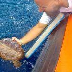 Turismo de Tenerife apadrina la devolución de una tortuga marina a su medio natural