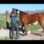 Desmantelan una red que comerciaba con carne de caballo no apta para el consumo