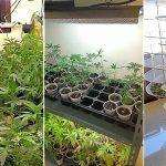 Desmantelan una asociación de consumidores de marihuana afincada en Arona