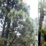 Bomberos de Tenerife intervienen en el rescate de un parapentista en La Orotava