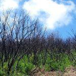 Alerta de altas temperaturas y el riesgo de incendios forestales en La Gomera