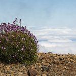 La Palma presenta un proyecto sobre seguimiento de Cambio Climático a la Fundación Biodiversidad