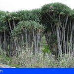 En fase de estudio la estrategia de voluntariado de la reserva de la biosfera La Palma