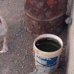 Decomisan en Santa Cruz un perro de raza pitbull por encontrarse en mal estado