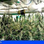 Desmantelan un cultivo de marihuana que contaba con hilo musical para favorecer las plantas