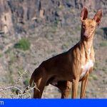 La Gomera limita la caza con escopeta a un solo domingo de la temporada