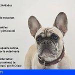 San Sebastián de La Gomera apuesta por el fomento de la adopción en el Día de la Mascota