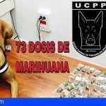 La Policía Local de Arona se incauta de 73 dosis de marihuana enterradas en jardineras