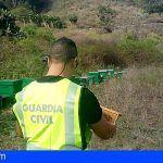 Investigan a dos acusados de un robo de ocho colmenares y cuarenta árboles frutales en El Sauzal