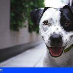 San Sebastián de La Gomera celebrará el 30 de septiembre el Día de la Mascota
